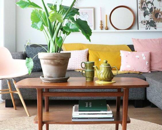 De vijf leukste kamerplanten van dit moment